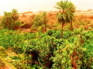 garden dhi dhee ayn baha saudi arabia