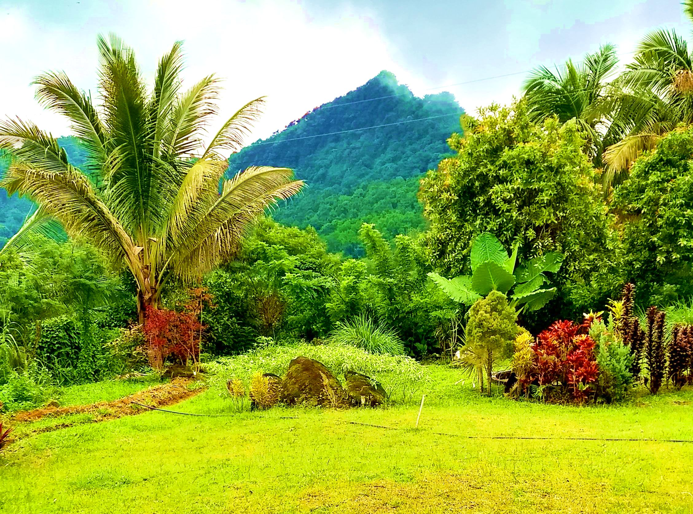 Bucari Iloilo Philippines landscape