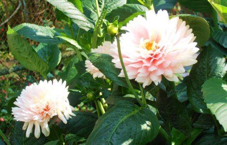 Bhubing Palace Gardens Chiang Mai Tahiland