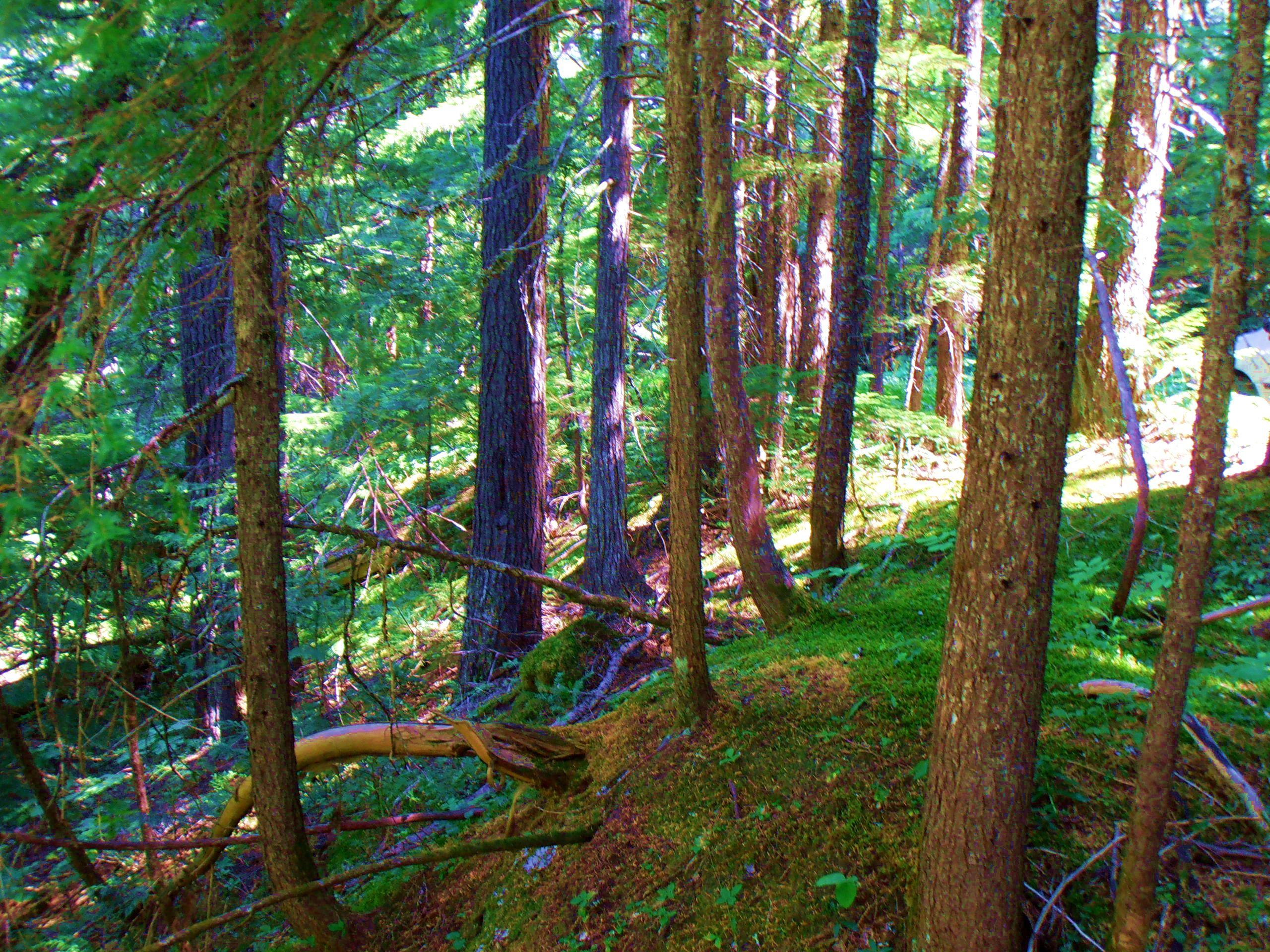 Priest Lake Idaho forest