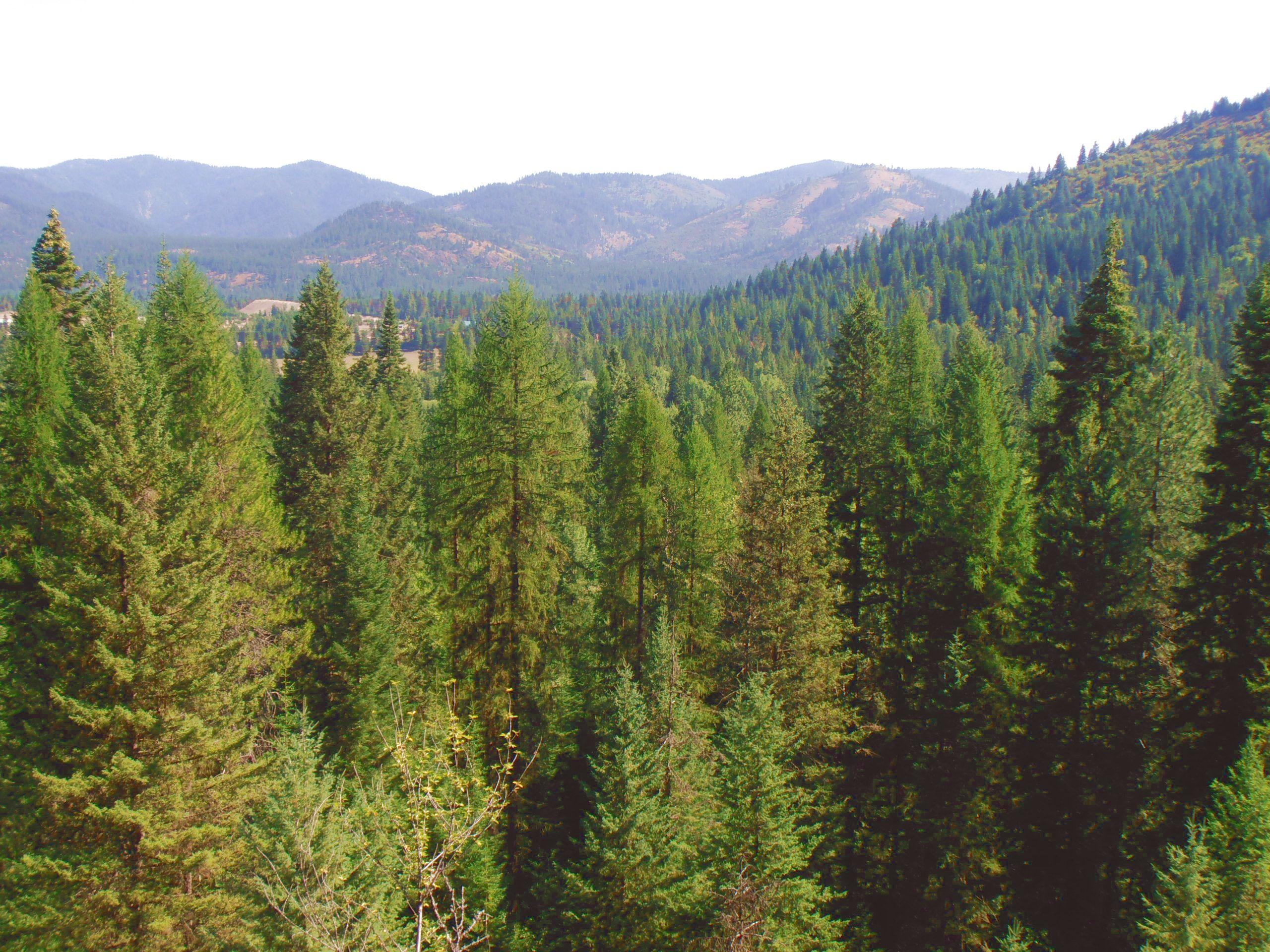 Pend Oreille County Washington landscape