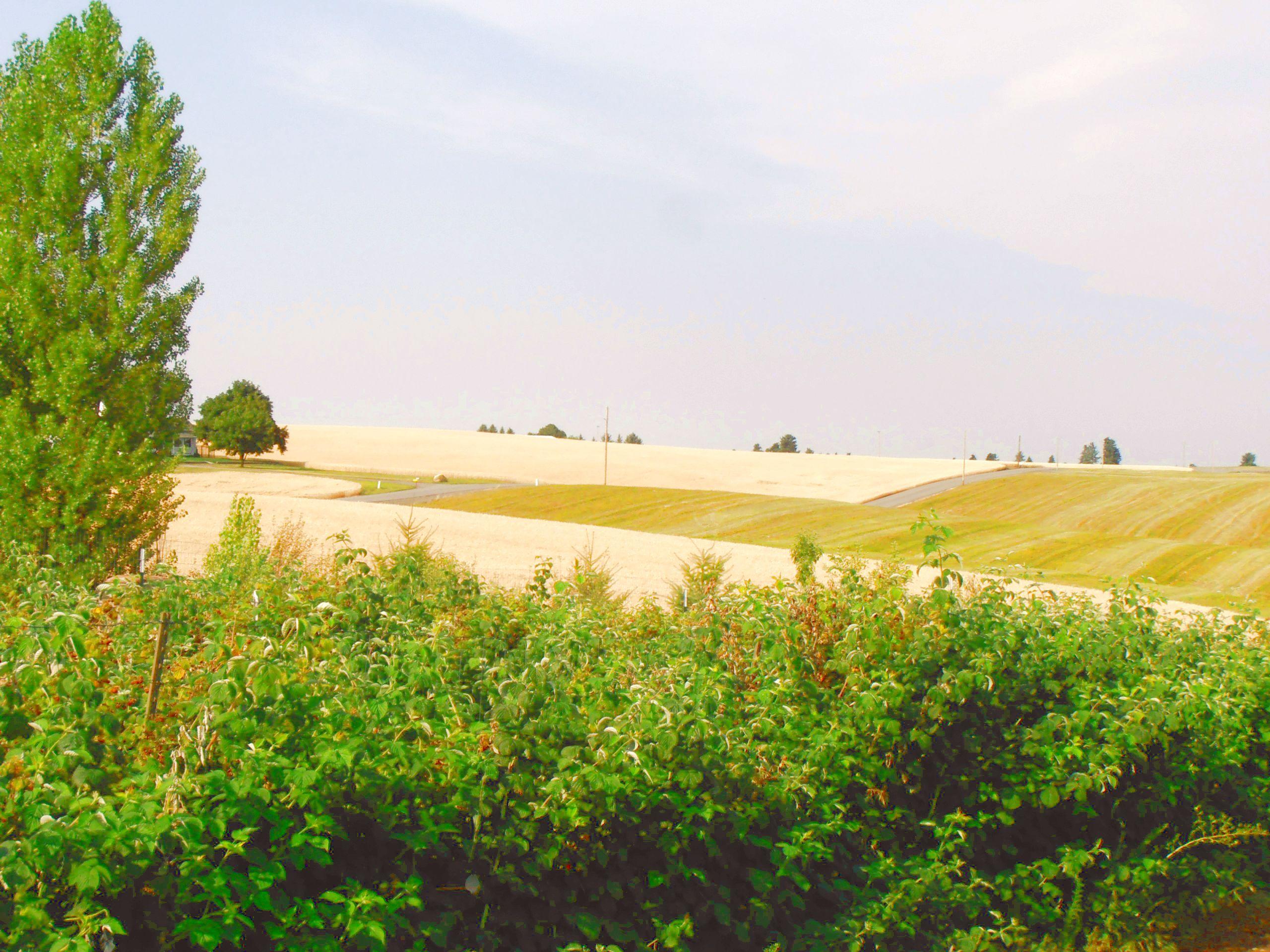 Greenbluff Peone Prairie Washington State