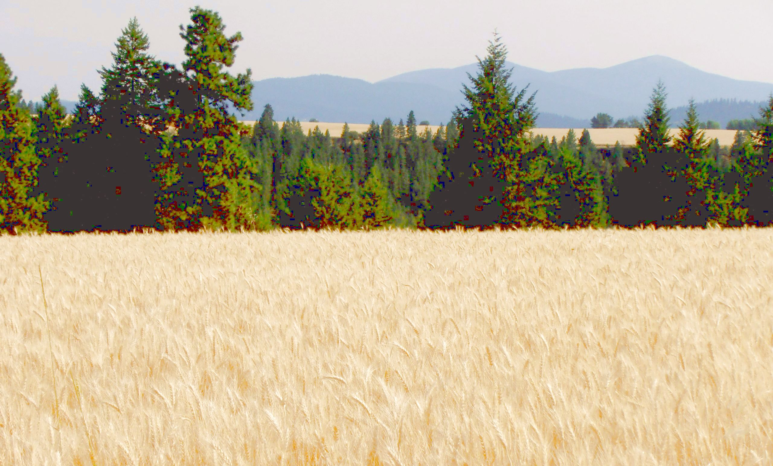 Peone Prairie Washington landscape