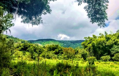 La Florida Pereira landscape
