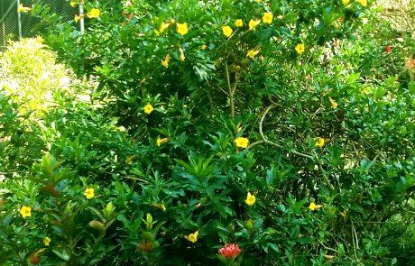 Ornamental, Pereira Botanical Garden