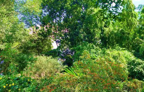 Ornamentals, Pereira Botanical Garden
