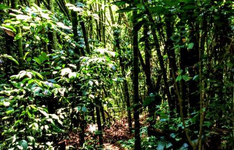 Native forest, Pereira Botanical Garden