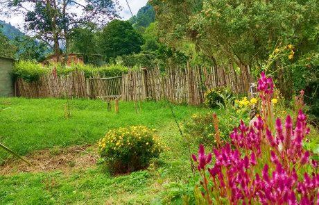 Quindio, Colombia landscape