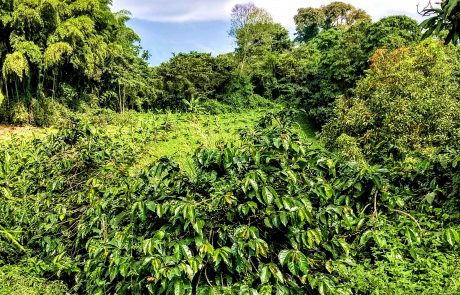 Coffee farm near Calarca, Quindio