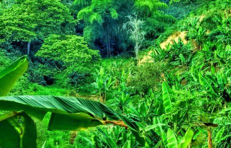 Quindio landscape