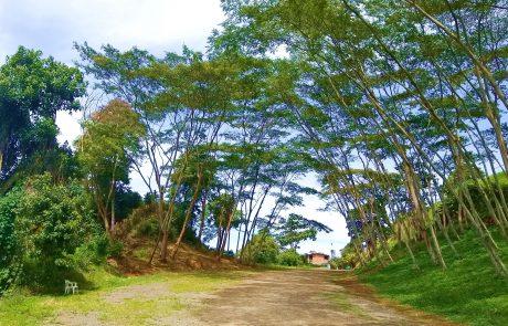 Acacias, Belalcazar, Caldas, Colombia