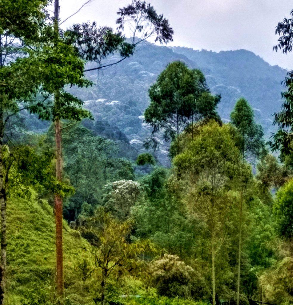 Near Santa Rosa de Cabal