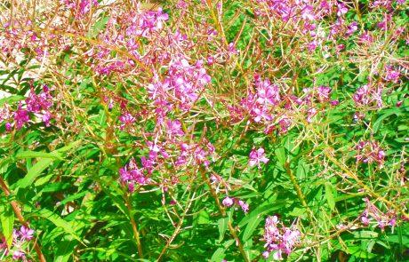 Botanical garden, Sandpoint, Idaho