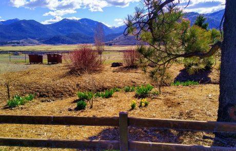 Landscape near Yreka, CA