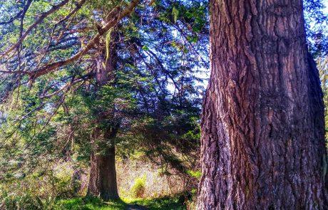 Azalea State Reserve McKinleyville, CA