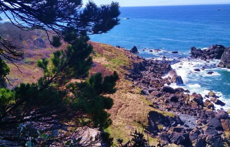 Patricks Point State Park near Arcata, CA