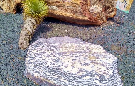 Jim Gray's Petrified Wood Co., Holbrook, AZ