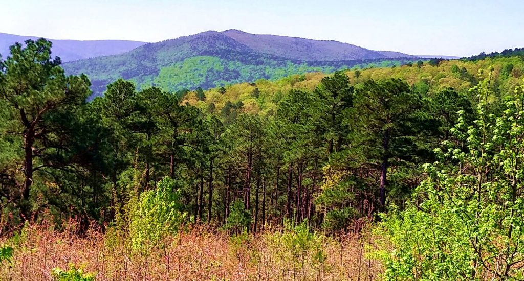 Ouachita National Forest landscape