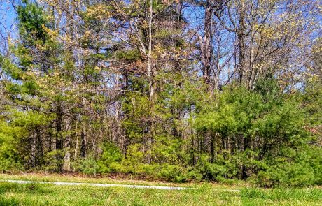 Blue Ridge Parkway, Cumberland Knob, NC